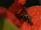 My Wasp