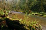 Cummins Creek Wilderness
