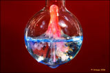 The chemist 8921