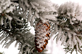 Nature's Christmas decoration
