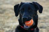 1. Tippy loves her ball..