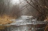 Clear Creek on a foggy March morning