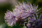 Delicate 'Dew Flower'