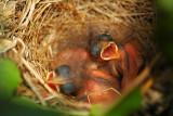 We've hatched!