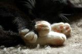 Minka's busy little paws at rest