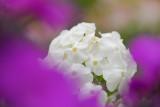 In a purple cloud