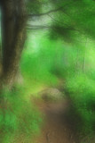 Mystical Forest Path