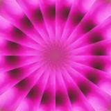 Petunia 1.jpg