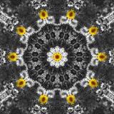 Sunflower 7.jpg