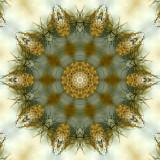 Anns Lace 1.jpg