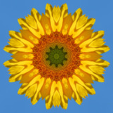Sunflower2 1.jpg