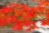 Glowing fall leaves