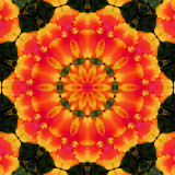 Hibiscus 6.jpg