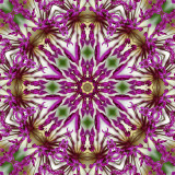 Allium 1.jpg