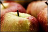 CRW_1810-apples3.jpg