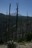 Mt. St. Helens (IMG_7022AY.jpg)