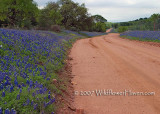 Bluebonnet Lane