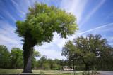 just a weird tree