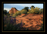 Southwest 2007