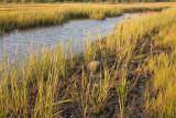 Howland Marsh