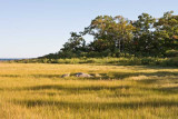 Stewarts Island