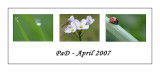 PaD April 2007