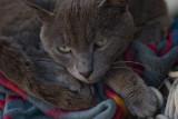 June 4, 2007 - Sorrento fishing village cat