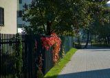 Autumnal Hoarding
