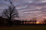 Big Oak Sunset