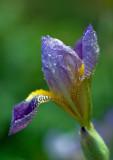 FLOWERS LOVE RAIN