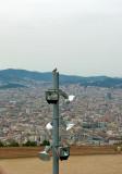 Dove On A Lantern Pole