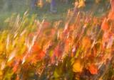 Leaves In Flames