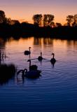 Swan Lake Sunset