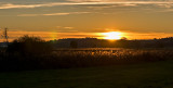 Sunset Of Golden Grass