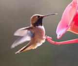 Reifel Bird Sanctuary 2007