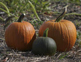 Pumpkins Old and New