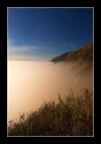 The Foggy Edge of Life