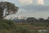Samburu  riverine forest