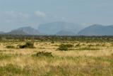 Samburu open shrub savanne
