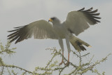 KENIA   2007  BIRDS