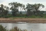 Samburu River and Lions