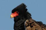 SOUTH -AFRICA   2006  BIRDS