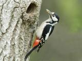 Woodpeckers - Spechten
