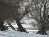 DSC_0139  Trees