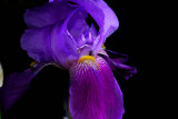 FLORA - FLOWERS