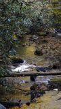 downstream 3.jpg