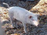 piggy 2.jpg