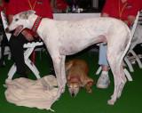 greyhound tail.jpg