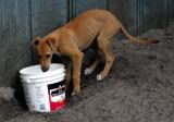 puppy drinking.jpg