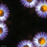 flower's story